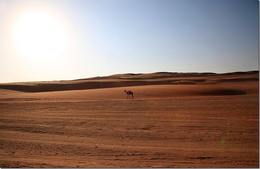 Desertul Oman