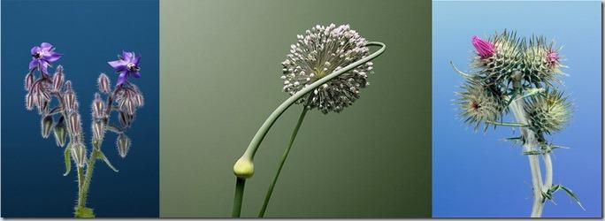 Florile lui Erwan Frotin