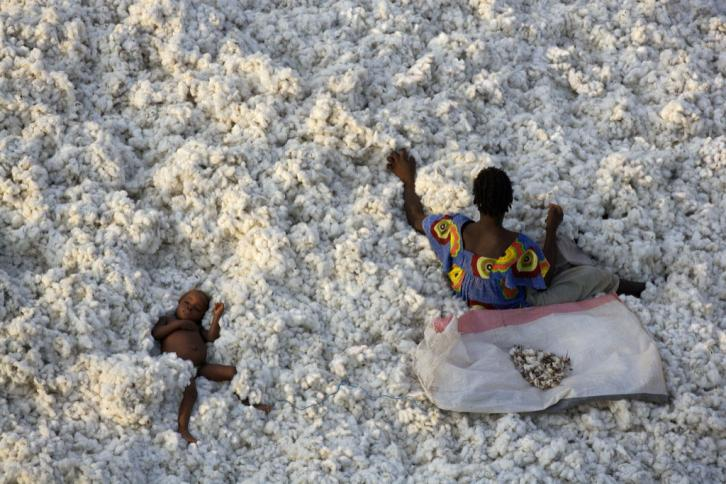 Cotton harvest near Banfora, Burkina Faso