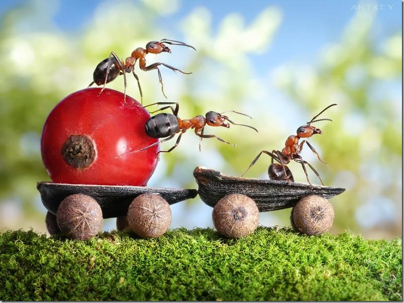 Povesti despre furnici