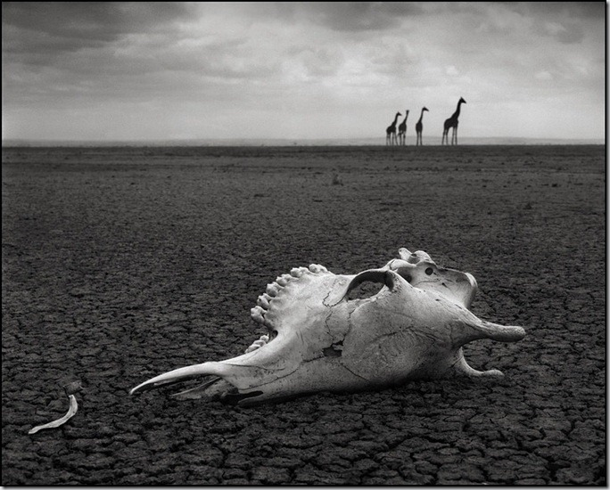 Natura salbatica a Africii Nick Brandt