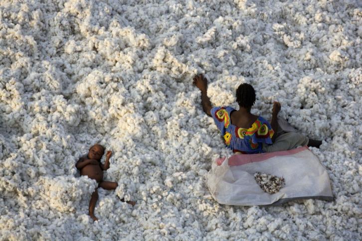 Cotton harvest near Banfora, Burkina Faso
