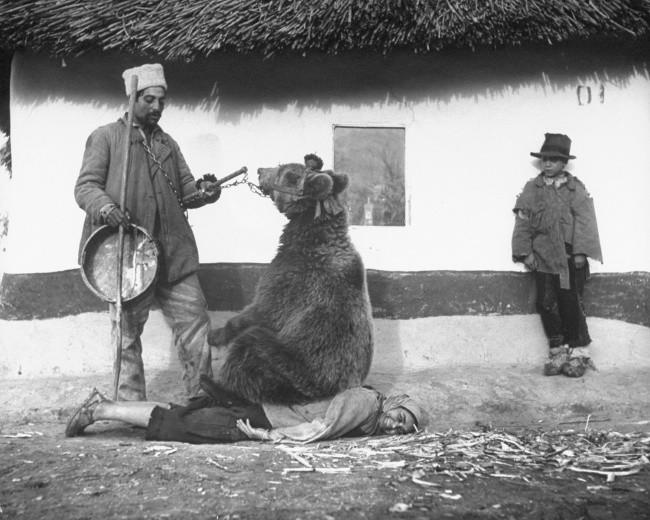 Tratarea de spate cu urs. România 1946.